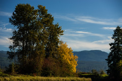 Just a Splash... (Prestidigitizer) Tags: autumn fall color colour tree leaves leaf river bank britishcolumbia canada mapleridge pittmeadows pentaxk3 pentaxda50135mm
