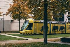 _DSC4106 (ALX-PHOTOGRAPHIE) Tags: automne autumn evening soir soire angers france tram tramway
