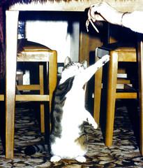 Slide 084-41 (Steve Guess) Tags: xmas christmas newhaw surrey england gb uk heidi cat kitten pussy