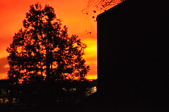 Firesky (viliris) Tags: firesky orange warmlight silhouette black tree orangesky colors oslo afternoonlight sunset