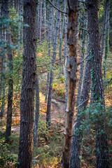 22102016-PBP_6135 (Berns Patrick) Tags: pins landes lac azur foret soleil matin ponton pigne