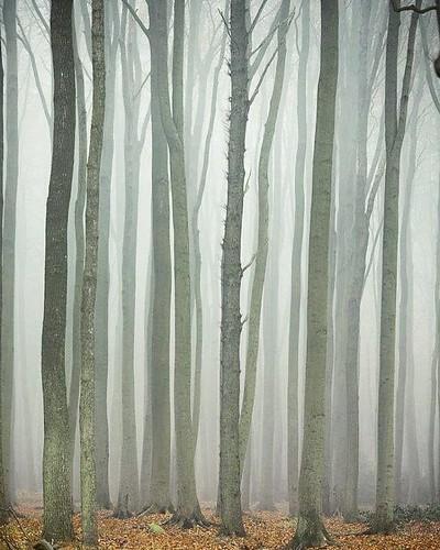 #buchen #mv #nebel #gespensterwald  #nienhagen  #mecklenburgvorpommern  #germany