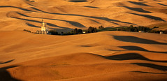 A Morning Once Remembered (Buddha's Ghost) Tags: palouse landscape dawn morning sunrise shadows hills rollinghills town golden wheat ripenedwheat browns tans sunup buddhasghost 6 5