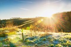 Full Spectrum of Rays (Andy Brandl (PhotonMix.com)) Tags: lensflares photonmix landscape rime hills kraichgau hdr grass rural sun morning germany