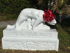 Gifted-wrapped panther (st_asaph) Tags: redribbon pinellas panther stpete snellisle