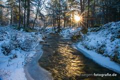 DSC02741 (norwegen-fotografie.de) Tags: norw norwegen norway norge femunden femundsmarka villmark hedmark see wildnis wald landschaft