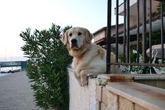 P1070051b - Hi, where you come from? (JB Fotofan) Tags: özdere türkiye turkey türkei tier dog hund lumixfz1000
