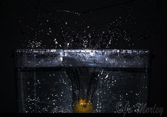 Lemon Splash (Jo_Morley) Tags: lemon fruit splash splashing water droplet droplets drop dropping fall falling container black background photoshop photography contrast sony splashart art experiment experiments exposure composition watermark yellow