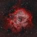 The Rosette Nebula (NGC 2237)