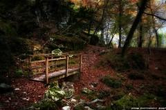 Otoo en el Urederra (Navarra) (JoseMi Campos) Tags: fotografia naturaleza paisaje otoo hojas puente urederra nikon d5300 bosque landscape