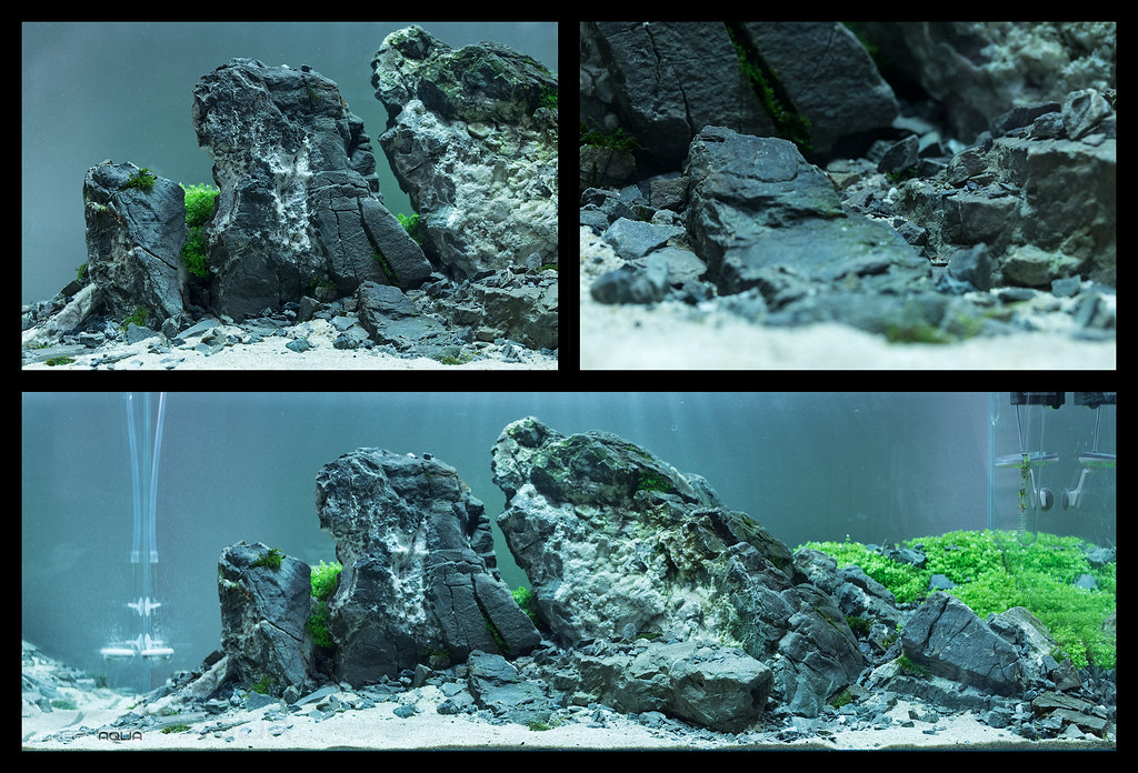 the world s best photos of ada and aquascape flickr hive