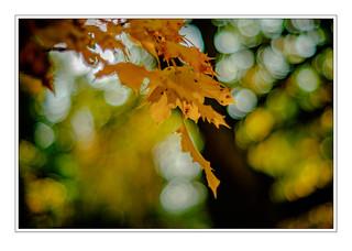 Autumn 1 NM