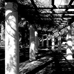 Safe Arbor (Dom Guillochon) Tags: noiretblanc time life nature garden plants existence sunlight shadows ombres reality dream safe arbor outdoor