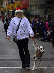 Dalmation On Parade (swong95765) Tags: dog parade dalmation pet animal spotted spotty