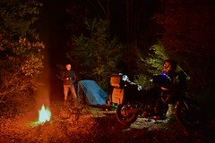 Pemberton forest campsite