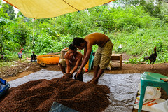 DSCF5035 (winnieyklai) Tags: spiceislands maluku moluccas indonesia ternate pulauternate cloves spicetrade clove