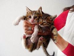 Τα λατρεμένα μου..My adorable .. (katerinamantani) Tags: kittens adorable cutekittens
