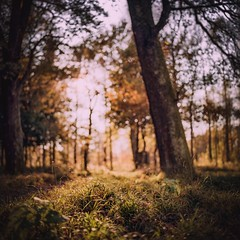 Antheringer Au (cardijo) Tags: austria sterreich salzburg tree baum forrest wald analog film kodak portra160 hasselblad planar nikon coolscan autumn herbst