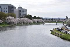 Otogawa River (eliseteshiraishi) Tags: okazakishi aichiken japan okazakicastle otogawariver aoarlivre aichi arquitetura árvore tree trees travel tranquilscene spring serenidade rio água castelo cursodeágua