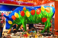 Dutch bull (patrick.tafani) Tags: vache fleur fleurs cow flower flowers tulip tulipe tulips tulipes amsterdam airport aroport dutch hollande bull taureau couleurs colors colored