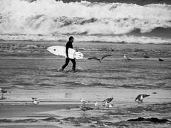 Entre aves y olas (Jaime Martin Fotografia) Tags: asturias gijon blancoynegro nature blackandwhite surf mar