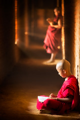 Novice monk reading book (anekphoto) Tags: bagan learning children rural monk outdoor robe tree pilgrimage two green burmese male umbrella myanmar novice people traditional asia faith religious small kid monastery education buddha tranquil man prayer little southeast reading burma red culture summer buddhist ethnic lesson teaching buddhism belief young tradition temple person boys religion book asian thailand combodia