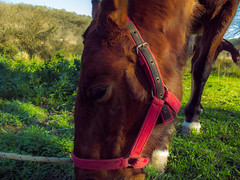 (bozzobelen) Tags: horse cuntry vacation animals canong12