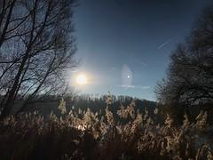 Am Baggersee (Blende2,8) Tags: reutlingen himmel sonne ufer see bume schilf