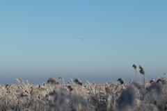 cold morning (beta karel) Tags: betakarel 2016 landscape nature white winter dutch flevoland oostvaardersplassen almere