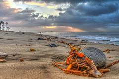 Sandscape with rock and seaweed (Michael F. Nyiri) Tags: southerncalifornia ocean pacificocean cabrillobeach ptfermin california sunrise