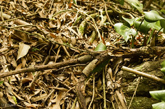 Camouflage (S.O Fotografa) Tags: 2014 altamar brasil crucero msc pandeazcar rodejaneiro sofotografa viaje camouflage lagartija