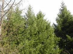 DSCN7494 (Gianluigi Roda / Photographer) Tags: apennines lateautumn trees fir