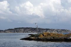 wiew from the ferry (helena.e) Tags: helenae öckerö sommar summer water färja ferry västragötaland sweden island islands fågel bird