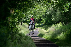 Summer Gallop (dobingphotos) Tags: horse summer yorkshire gallop horseriding trail walk nature animal