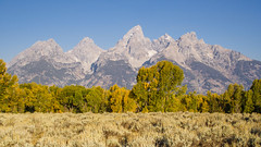 The Early Side of Fall Colors in Grand Teton (Jeffrey Sullivan) Tags: grand teton national park grandtetonnationalpark landscape nature travel photography wyoming unitedstates roadtrip usa canon photo copyright jeffsullivan september