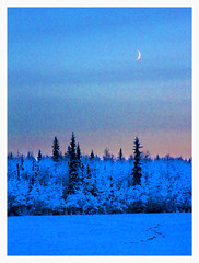Our Northern Light (R. Drozda) Tags: fairbanks alaska northpole chenafloodcontrolproject twilight aftersunset moonrise spruce trail frost snow minus27f iso1000 supersaturated birdsallinspired drozda