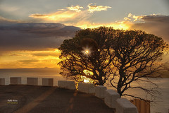 (408/16) Hasta maana (Pablo Arias) Tags: pabloarias photoshop nxd cielo nubes espaa puestadesol ocaso dorado rbol silueta benidorm alicante comunidadvalenciana