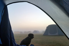 Good Morning (StephenTaylor430) Tags: throughthehotelwindow tent dog poodle pet camp camping campsite wittering morning dawn daybreak mist outdoors guard watching