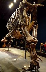 20161206_110618 (durr-architect) Tags: tyrannosaurus rex trex town skeleton naturalis nature museum leiden exhibition fossil consevation carnivorous dinosaur montana black hills institute