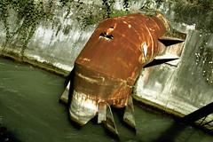 Crustacean (Alata) Tags: red verde green water river fiume reno crustacean acqua rosso aragosta cartiera crostaceo lamadireno lobsten