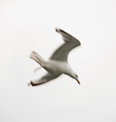 _DSC8519 (Alex Pezeshkmehr) Tags: sea motion blur birds wings long exposure flight