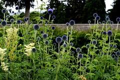 Sfere blu (alosasso) Tags: blue ireland summer dublin garden estate blu sphere powerscourt spheres dublino irlanda giardino alessandro sfere sasso sfera alessandrosasso alosasso