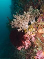 Soft Corals (scubaluna) Tags: animals wall fauna asia southeastasia wildlife philippines wideangle sealife tropical biology corals zoology unterwasser softcorals overgrowing siquijorisland weichkorallen scubalunaphotography