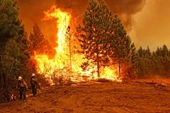 Rim Fire: Back Fire Flames (sjrankin) Tags: california trees northerncalifornia fire edited smoke flames yosemite yosemitenationalpark processed pinetrees backfire rimfire usfs unitedstatesforestservice tonalcontrast mikemcmillanusfs 3september2013