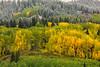 Fall Meets Winter (Amy Hudechek Photography) Tags: autumn winter snow colorado getty gettyimages keblerpass spetember happyphotographer mygearandme amyhudechek