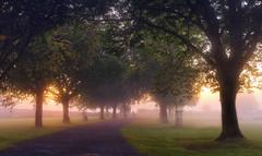 Soft Visions (jactoll) Tags: light mist landscape dawn nikon mood warwickshire riveravon rivermist bidfordonavon dawnmist d7000 jactoll