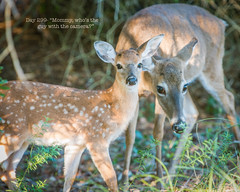 Day 299- Mommy, whos the guy with the camera? (Wishard of Oz) Tags: baby deer fawn day299 project365 2013yip 365the2013edition 365in2013 26oct13 day21262192