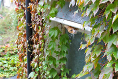 "Peeping Tom • <a style=""font-size:0.8em;"" href=""http://www.flickr.com/photos/89972965@N03/10519009094/"" target=""_blank"">View on Flickr</a>"