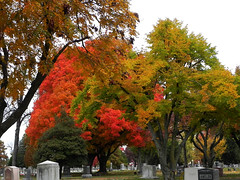 11_02_13_ Fall Colors in Hazelwood Cemetery (Rottlady) Tags: trees fallcolors autumncolors springfieldmissouri theozarks rottlady