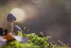 Little things (Soloross) Tags: wood blue autumn light sky sun art mushroom colors beauty grass leaves alberi canon reflex colore artistic blu magic dream picture sguardo erba silence cielo foglia musk piccolo sole sentiero muschio autunno riflessi bianco luce bellezza bosco magia sogno silenzio sfondo fungo cammino piccoli radura delicatezza soloross